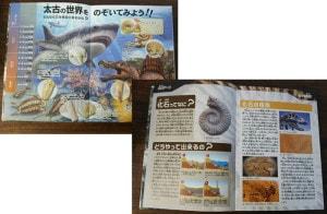 化石発掘図鑑冊子のコンテンツ