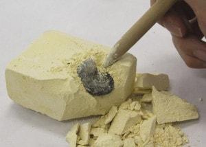 化石を発掘中